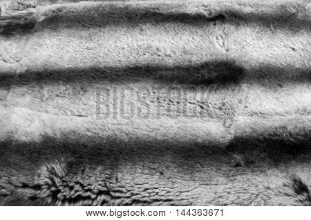 Rabbit Fur Texture, Background