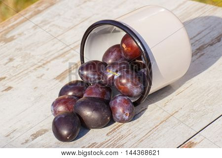 Plums Spill Out Of Metallic Mug On Wooden Table In Garden On Sunny Day