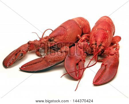 Twin Steamed Lobsters -  A culinary delight.