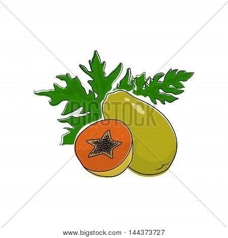 Papaya Isolated on White Background, Tropical Fruit Pawpaw, Vector Illustration