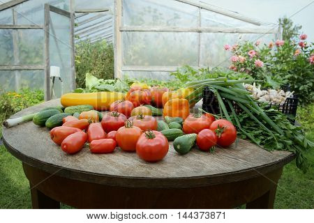 Freshly harvested vegetables. Tomatoes, cucumbers, peppers, parsley, zucchini, leeks, garlic, spinach on table near greenhousenear greenhouse.