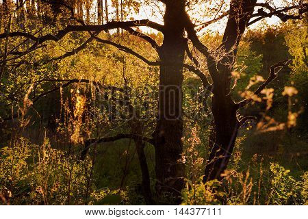 Sunlit leaves of young trees and shrubs. Boskovice