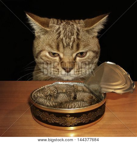 A sad cat looks at a tin can. The tin is filled with kittens. Maybe it is a nightmare.
