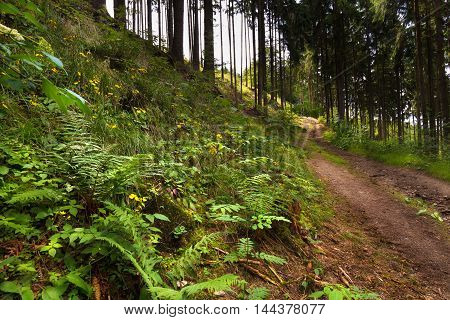 Forest path and hillside with plants. Moravian landscape Boskovice.