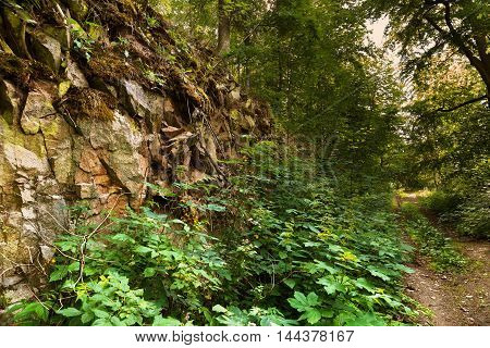 Forest path and rock covered with moss. Moravian landscape Boskovice.