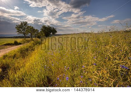 Field and meadow flowers. Moravian landscape Okrouhla.