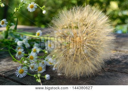 Air dry flower in the form of umbrellas (similar to dandelion) and field daisies on a wooden table.