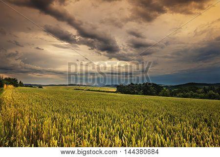 Dense clouds and grain field. Moravian landscape Obora.