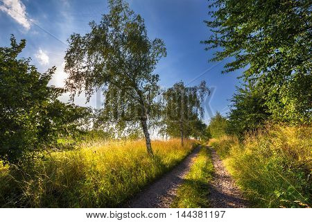 Dirt road lined with trees. Moravian landscape Makov.