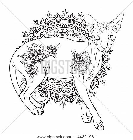 Coloring book pages for kids and adults. Hairless sphynx cat with mehndi ornaments isolated vector illustration