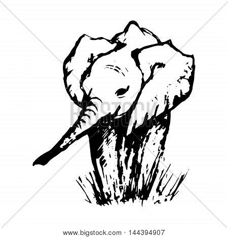 Graphic image of a baby elephant in the grass vector illustration on white background