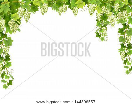 Frame from hanging bunches of ripe white grapes with branches and leaves.