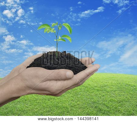 Hands holding a fresh small plant with soil over green grass with blue sky and clouds Ecology concept