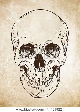 Hand Drawn Line Art Human Skull. Da Vinci Sketches Style Over Grunge Aged Paper Background Vector