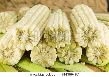 Fresh Picked Corn Cobs In A Row