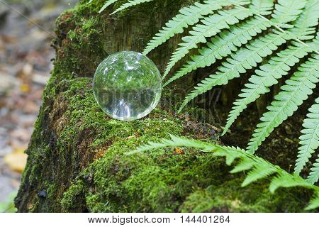 The Concept Of Nature, Green Forest. Crystal Ball On A Wooden Stump With Leaves. Glass Ball On A Woo