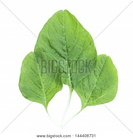 Fresh Spinach Leaf Nutrition Vegetable Ingredient