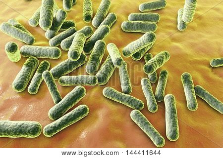 Propionibacterium acnes, 3D illustration. Bacteria which are found in the hair follicles and pores of the skin as part of normal flora but can also cause acne in case of an over-production of sebum