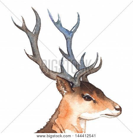 Watercolor deer's head with horns wood animal isolated