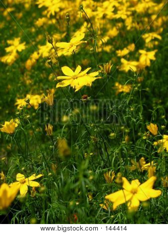 Single Yellow Flower