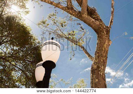 árvore e poste antigo apontando a direção do sol, iluminação natural e artificial
