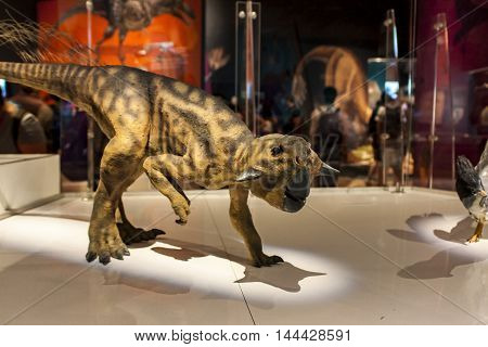 Psittacosaurus Sinensis At American Museum Of Natural History In New York