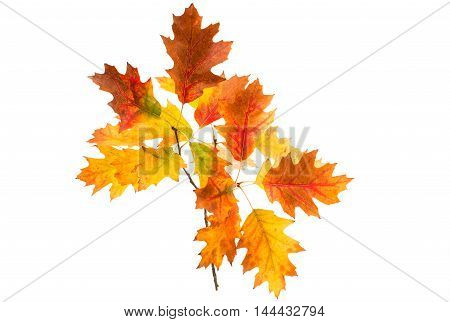 autumn leaves november, season on a white background