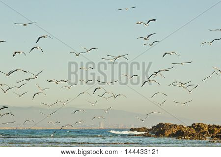 beach scene with Seagulls and birds at sunrise flying across the water with waves breaking in the background