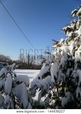 A fir full of snow, with sunlight