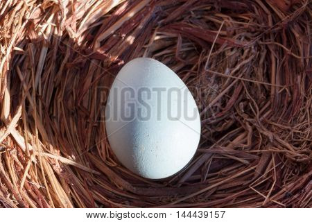 Egg image. birds are a marvel so fragile. an exceptional photo