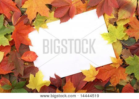 Colorful frame of fallen autumn leaves
