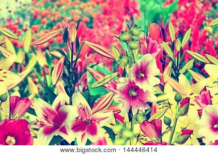 Summer landscape. colorful bright flowers lilies and mallow