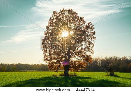 autamn tree in green field with sun
