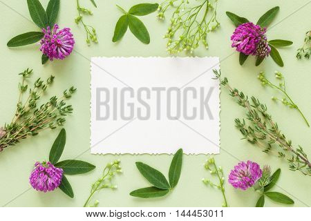 Old Empty Photo For The Inside And Frame Of Herbs And Flowers On Green Background. Flat Lay, Top Vie