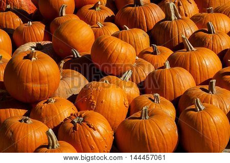 A pile of pumpkins at a pumpkin patch. Some have bumps on them and others are smooth. All are a deep orange color.