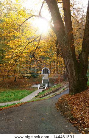 alley in the city park at the autumn