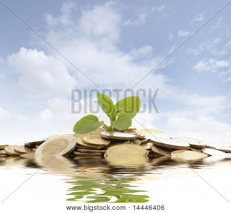 Concept of a plant and a lot of golden coins isolated on white background