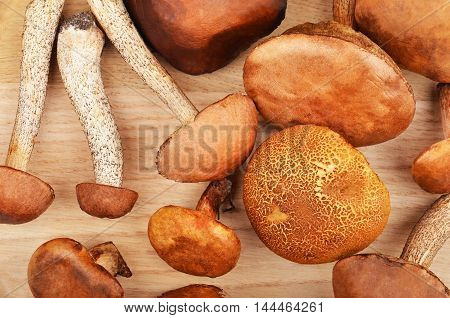 Wild Forest Mushroom On Wooden Board