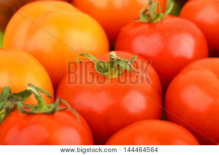Tomato, Close Up