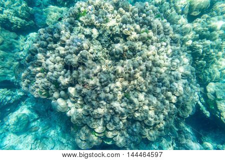 hard of coral reef underwater sea and small fish
