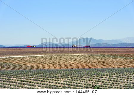 Harvester on lavender field in Provence near Valensole France