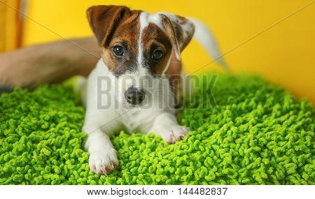 Cute dog on green pillow