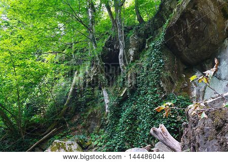 Rocky with trees and ivy in the mountainous southern forest