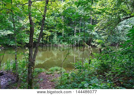 Small marvellous lake among the southern forests