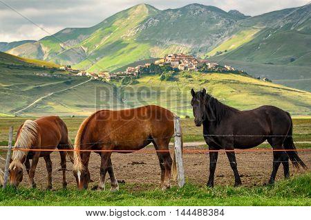 Castelluccio di Norcia (Umbria) scenic view and horses
