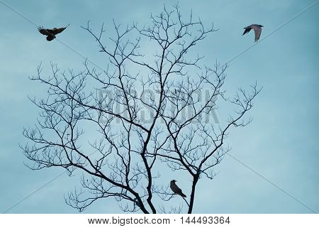 Silhouette of lonely tree and bird on blue background