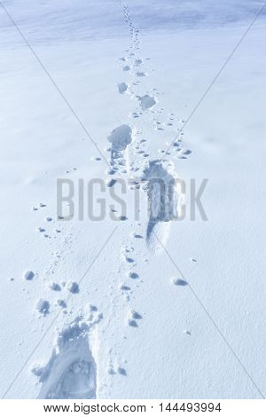 Winter background with footprints in the snow - Elements of a rich winter a thick layer of snow with footsteps in it. Perfect for a winter scene.