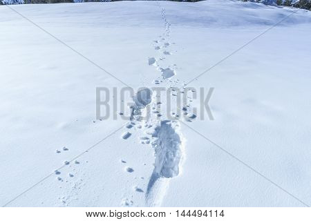 Winter scene with footsteps in the snow - Close up image with footprints in the snow creating a path towards the horizon. Great as a winter background.