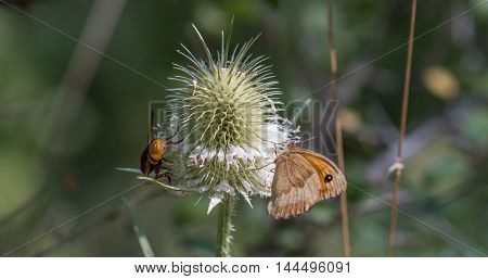 butterfly and fly perched on plant close-up