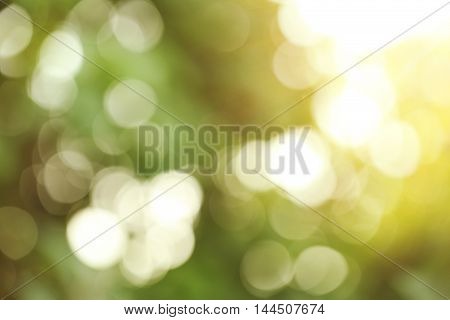 The Bokeh of abstract green nature background